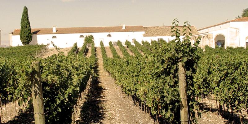 Azienda Agricola Alberto Longo