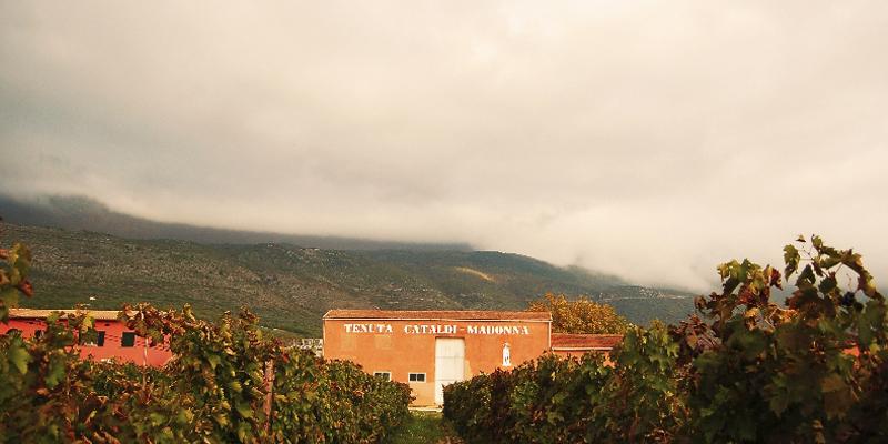 Azienda Agricola Luigi Cataldi Madonna